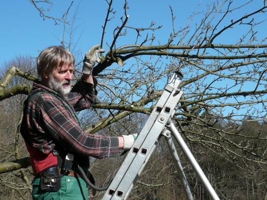 Ein Obstbaumwart in Aktion